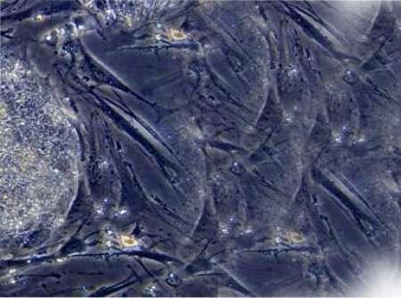 Beneficios biologicos terapias celulares - Dr. Juan Monreal