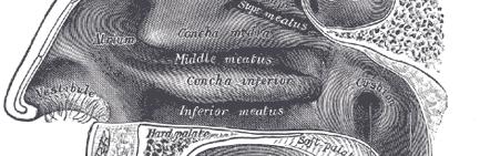 Qué es una Rinoseptoplastia