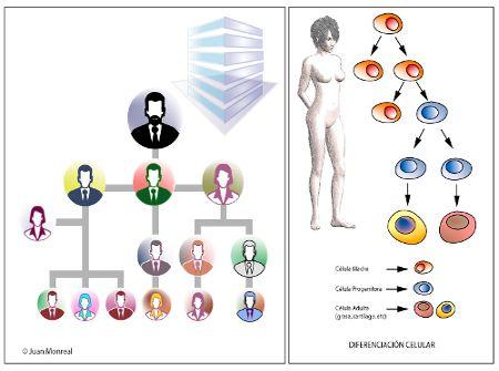 Me pueden explicar la diferencia entre células madre y células regenerativas?